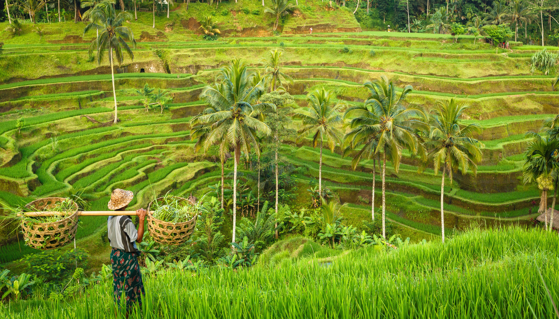 Engagement on Deforestation